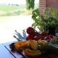 ingrédients des Tagliatelles toscanes aux fleurs de courgettes