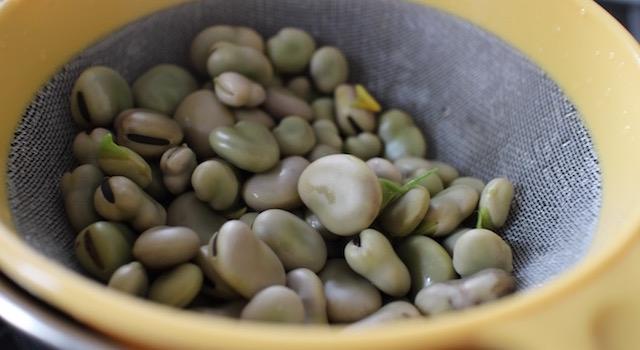 Cuire les fèves - Tartinade de fèves fraiches