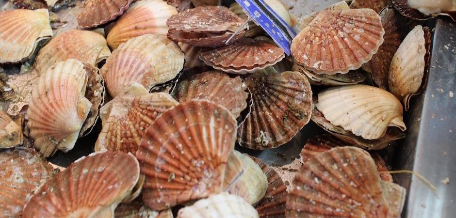 coquilles saint jacques - Le marché de Talensac - la visite foodie à Nantes