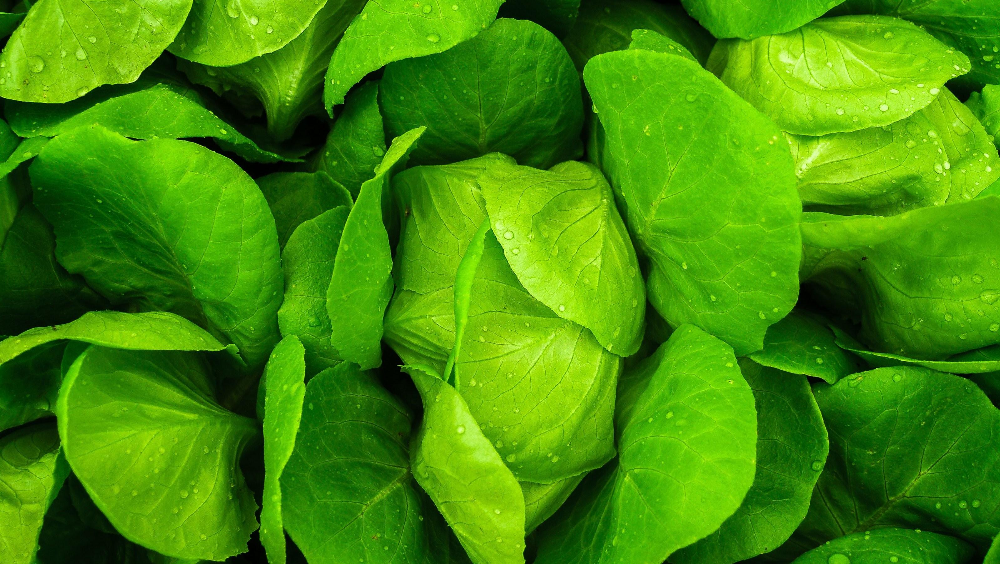 salade laitue - Tendances food de quoi va-t-on parler en 2019?